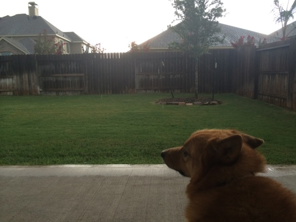 Puppy watching storm