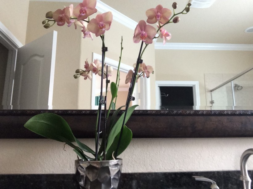 Orchid on my bathroom counter